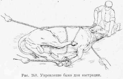 кастрация животных