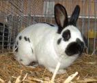разведение кроликов основы
