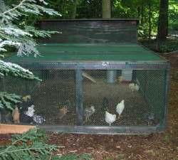 Ограждение для цыплят